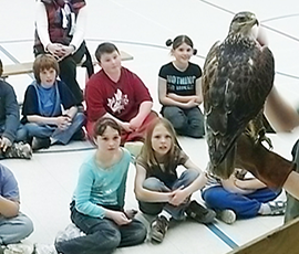 Children learning about a falcon